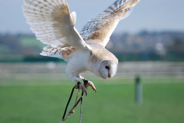 Bird photography 1.jpg