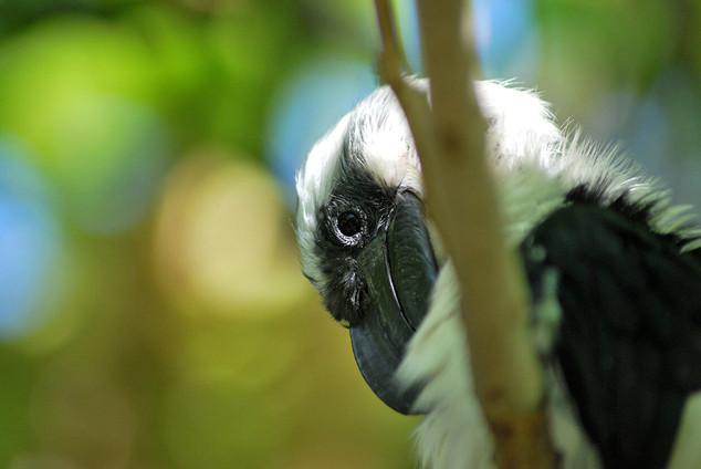 Bird photography 21.jpg