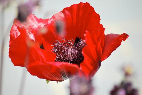 Flower photography 16.jpg