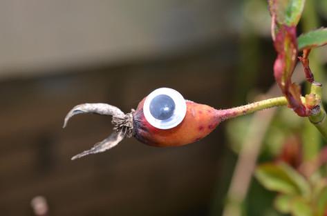 Google eye bird 1.jpg