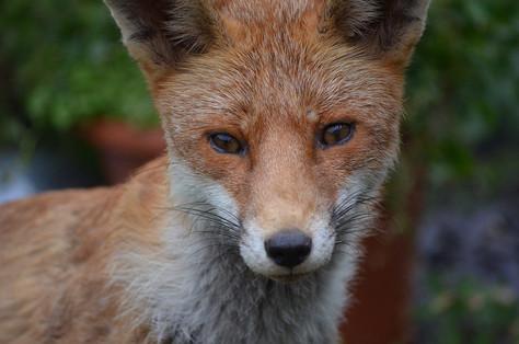 Fox photography 8.jpg