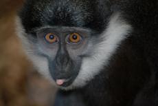 Animal photography 15.jpg