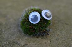 Google eye moss.jpg