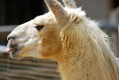 Animal photography 33.jpg