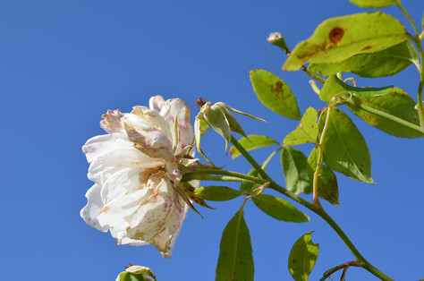 Flower photography 19.jpg