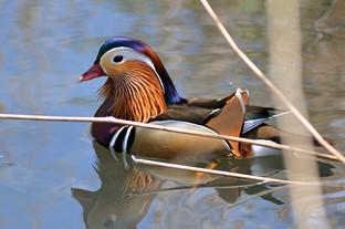 Bird photography 24.jpg