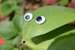 Google eye leaf.jpg