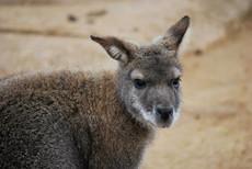 Animal photography 39.jpg