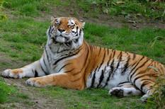 Animal photography 1.jpg