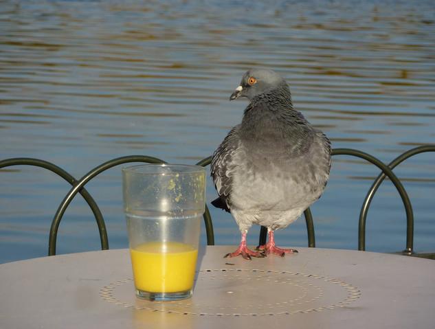 Bird photography 25.jpg