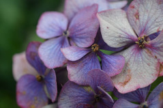 Flower photography 18.jpg