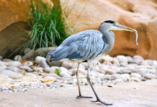 Bird photography 9.jpg