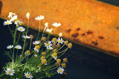 Flower photography 23.jpg
