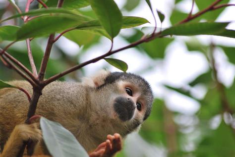 Animal photography 38.jpg