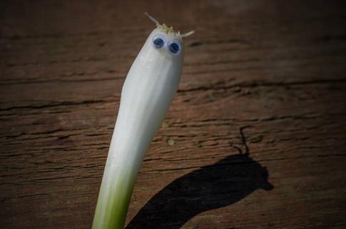 Googly eye spring onion 2.jpg