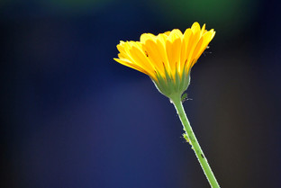 Flower photography 10.jpg