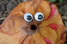 Google eye camelia 2.jpg