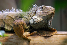 Animal photography 28.jpg