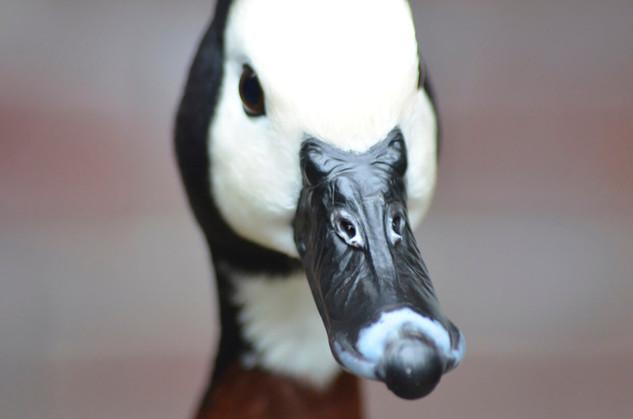 Bird photography 14.jpg