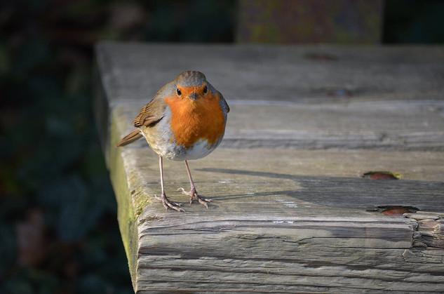 Bird photography 20.jpg