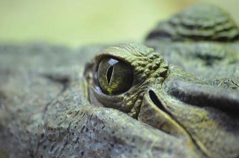 Animal photography 21.jpg
