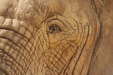 Animal photography 31.jpg