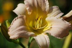 Flower photography 22.jpg