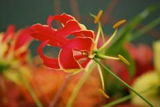 Flower photography 11.jpg