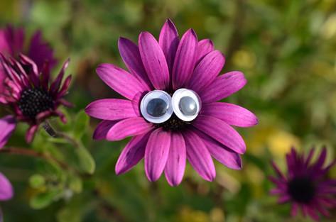 Google eye flower.jpg