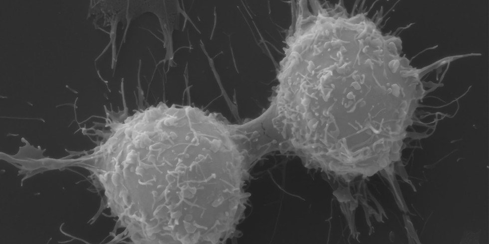 Ontario Cell Biology Symposium (online version)