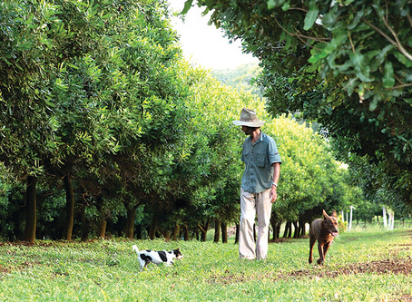 Regenerative Agriculture: 25 Things to Know Now