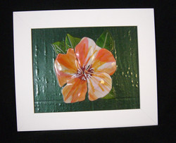 Korfin Hibiscus