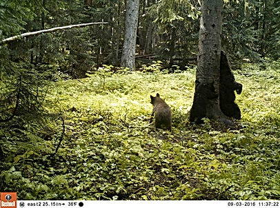 I took a picture of some bears