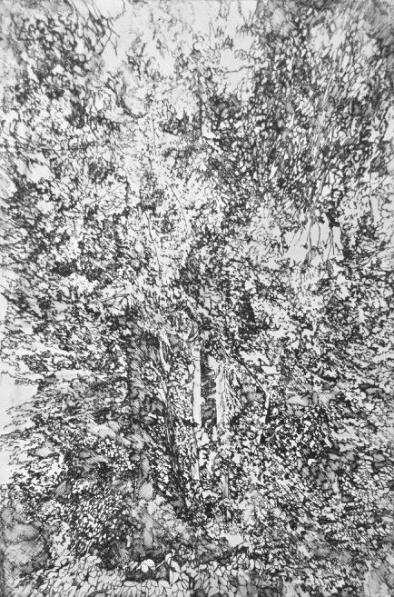 Forest Series No. 10 Etching