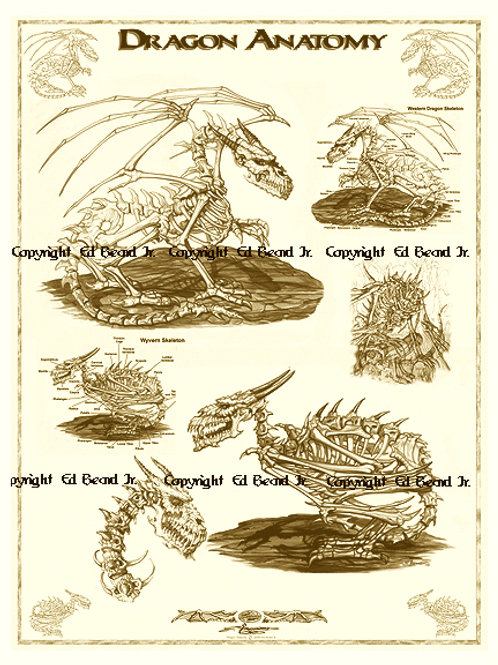 Dragon Anatomy Poster