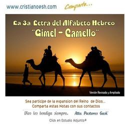 GIMEL CAMELLO