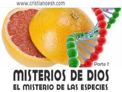 MISTERIOS DE DIOS 7