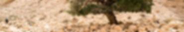 israel-3564085_1920.jpg