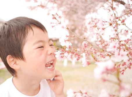 高崎市の桜の開花🌸