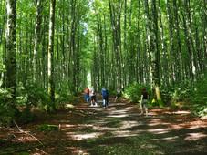 Bosque + gente.jpeg
