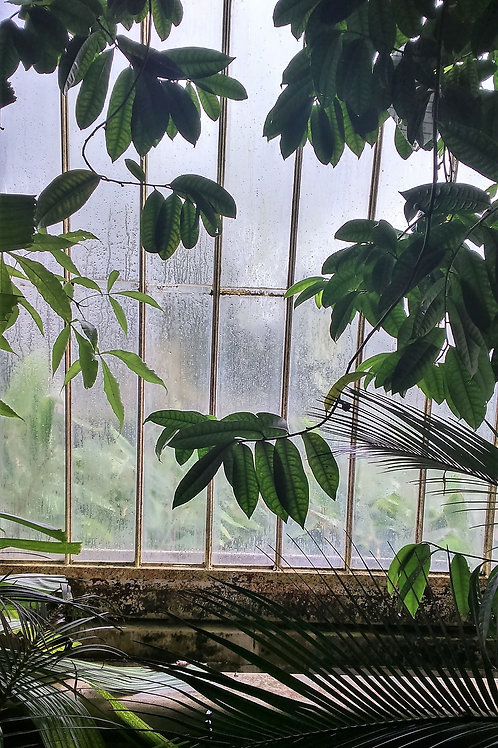 An afternoon at Kew Gardens