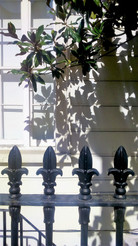 SAsh window with rambling foliage