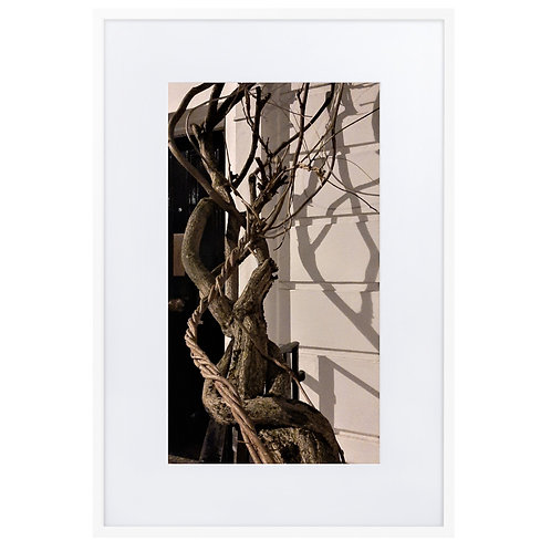 Intertwined branches with shadows