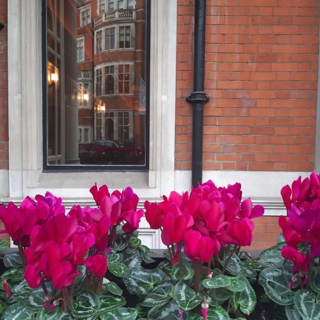 Mayfair details with magenta cyclamen