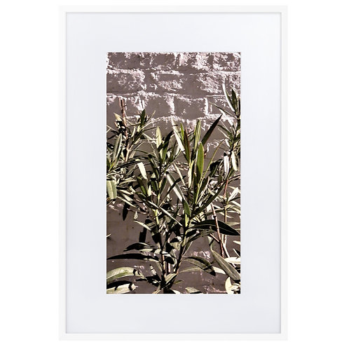 Olive tree at night