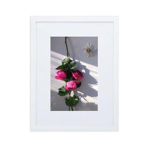 Magenta roses with daisy