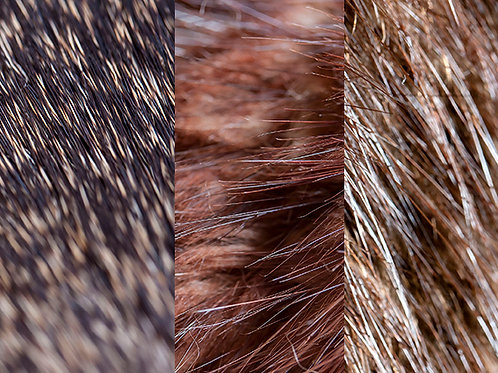 Fur Selection Pack