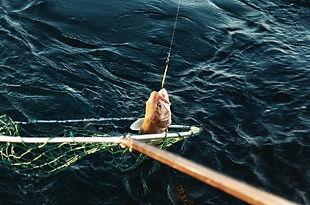 Lake Superior Lake Trout