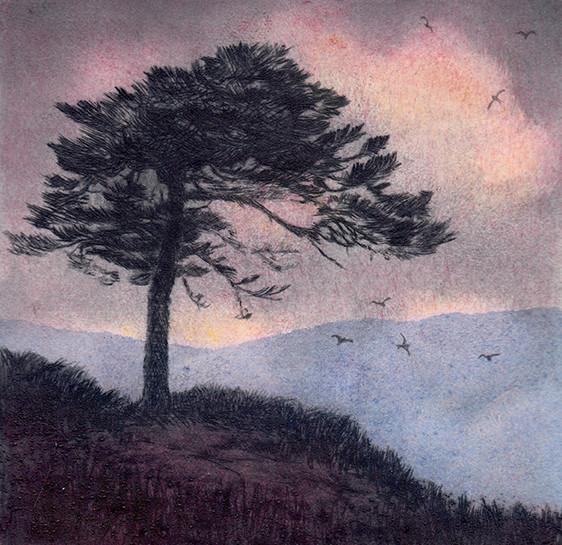 'High Pine'
