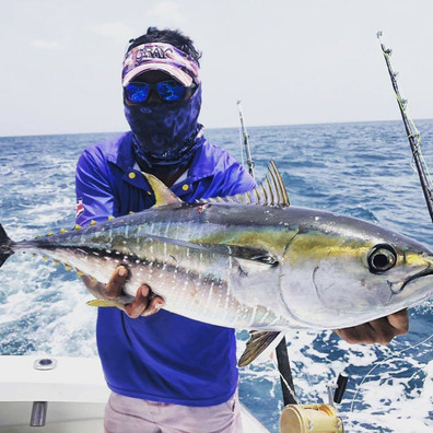 Yellow Fin Tuna - Gorgeous Catch near Playa del Coco